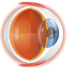 Retinal Services
